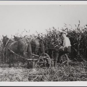 Charles Segerstrom working in the fields