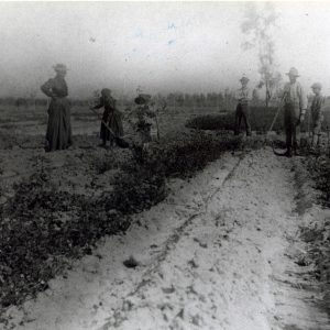 C.J. Segerstrom and family farming the lima bean fields