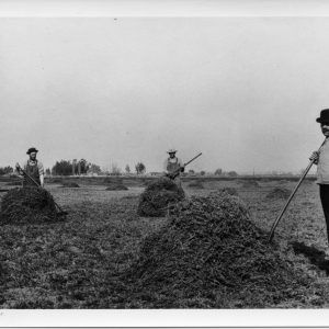 The Segerstroms farm the family fields, 1912.